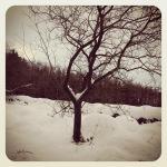 Wonder, wisdom and winter sun
