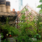 Delighting in the tiny: an inspiring rooftop garden