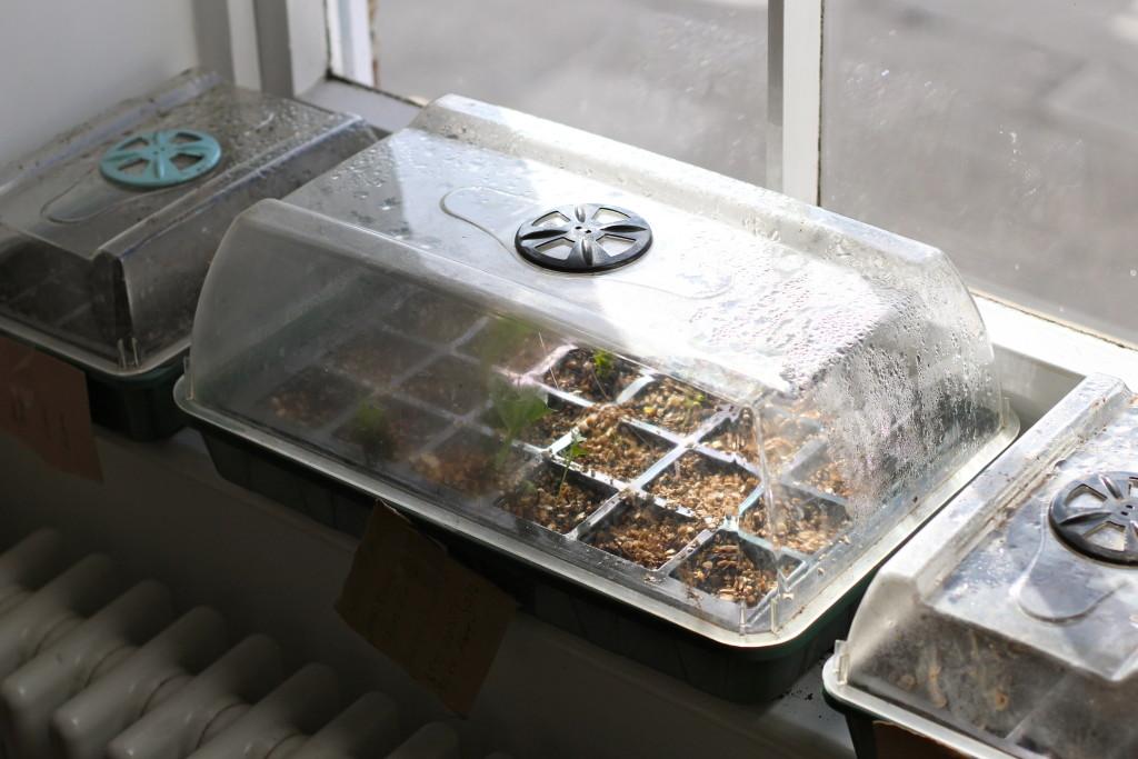 Seeds on windowsills