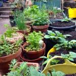On beinga gardener