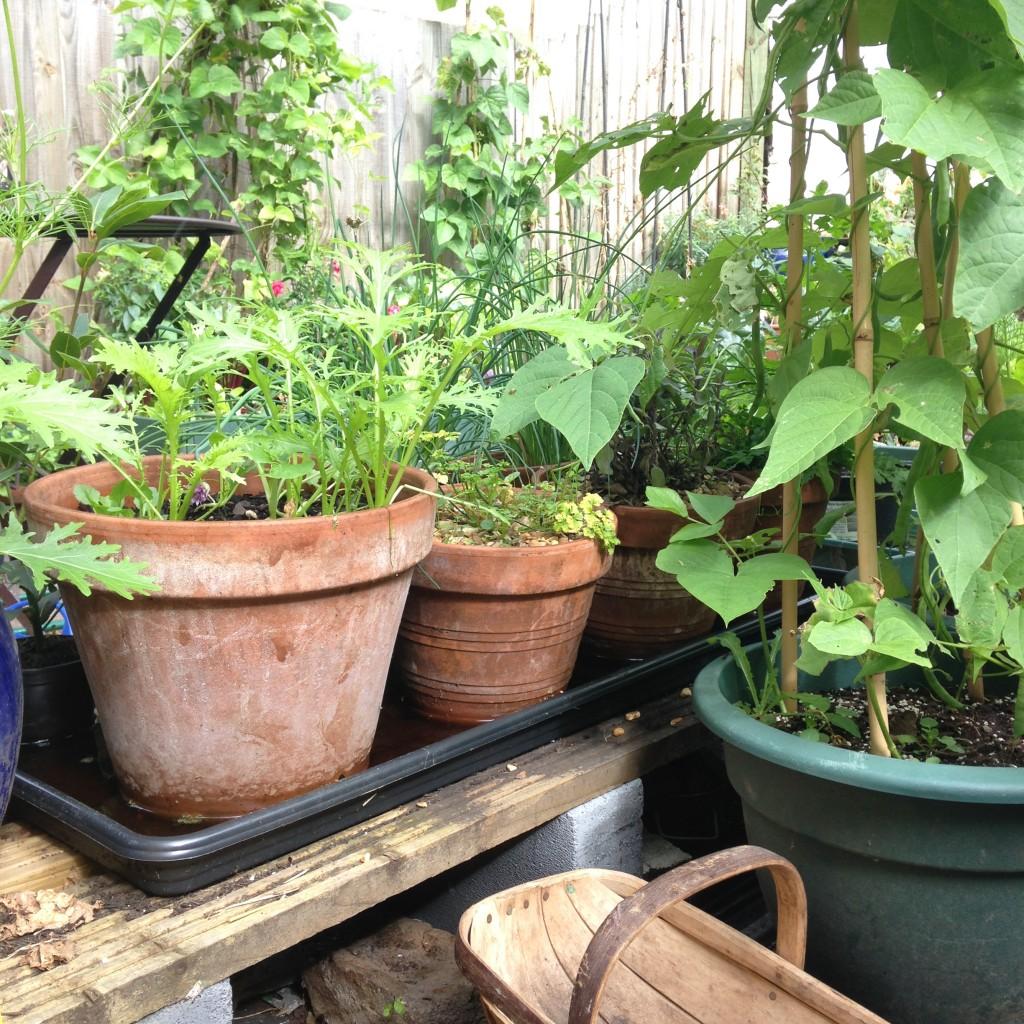 From decking plank to herb garden
